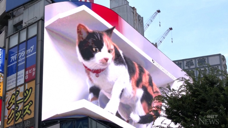 Giant 3D cat featured on Tokyo billboard