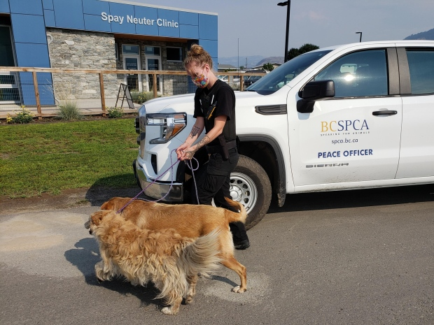The BC SPCA is sharing photos of some of the 41 animals rescued from Lytton, B.C. after the devastating fire there late last month. As of July 9, 11 of the rescued animals had been reunited with their owners. Others were still in SPCA care until their owners were ready to take them back. (Photos courtesy of BC SPCA)