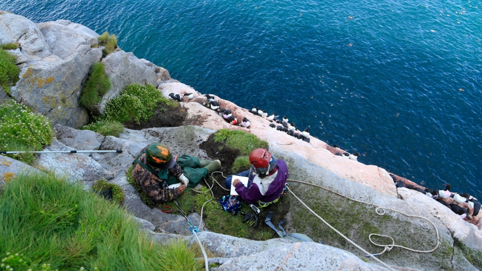 thick-billed murre researchers