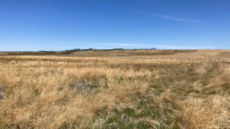 Hot, dry weather is causing problems for Saskatchewan producers in 2021. (Supplied: Government of Saskatchewan)