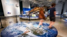 People visit the Canadian Museum of Nature as Ontario enters phase 3 of reopening during the COVID-19 pandemic in Ottawa on Friday, July 16, 2021. (Sean Kilpatrick/THE CANADIAN PRESS)