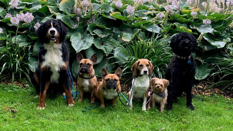 Packlife Dog Retreat
