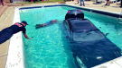 A teenager in Colorado ended up in hot water after driving their car into a swimming pool. (Lakewood Police Department)