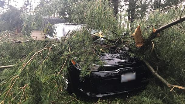 Parry Sound storm damage