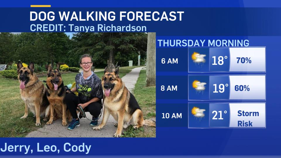 Dog Walking forecast July 28