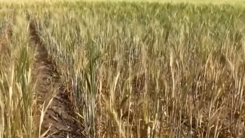 Aid coming for farmers during hard season