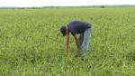 Johnny Spruit of Triple J Farms checks over a soybean field ravaged by Tuesday's hailstorm. (Nate Vandermeer/CTV News Ottawa)
