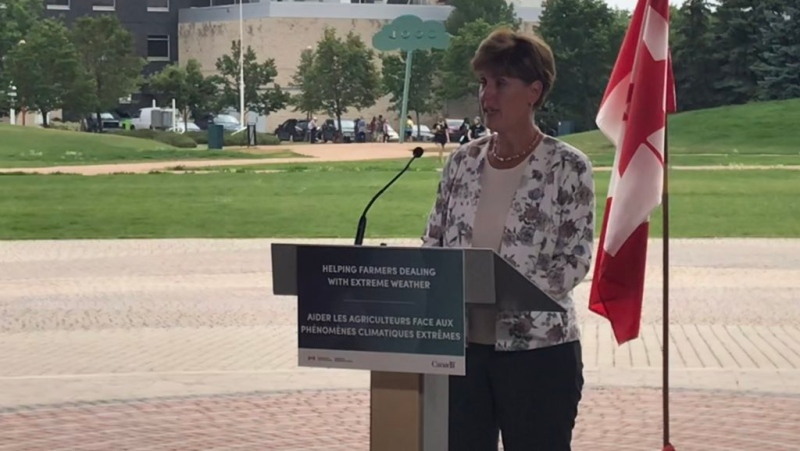 Marie-Claude Bibeau making an announcement to help farmers and ranchers in Manitoba. July 22, 2021. (Source: Josh Crabb/CTV News)