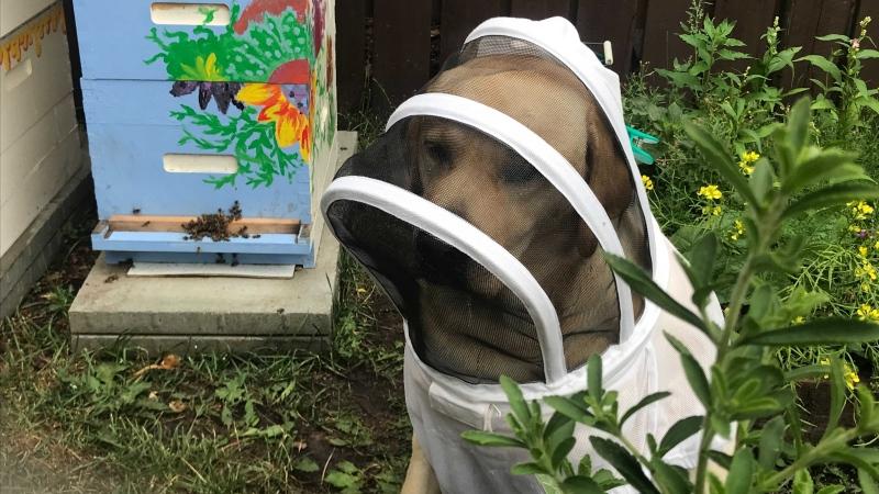 beekeepingdog