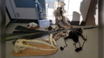 A photo provided by CBSA shows items allegedly seized in late May at a port of entry.
