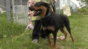 Rescue dogs up for adoption