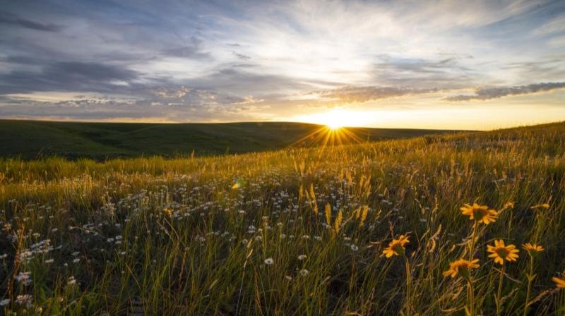 Raising funds for grassland conservation