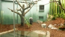 Zoo introduces gateway to Asia