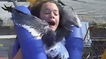 Teen hit by seagull