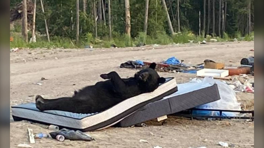 Black bear laying on a mattress in northern Ont.