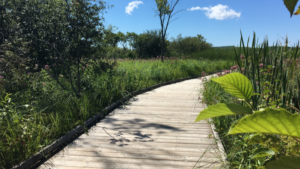 Unique birding and breakfast event happens at the Wye Marsh in Midland on Tues., July 27, 2021. (Courtesy: Wye Marsh)