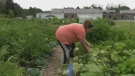 Community garden looking to make big expansion