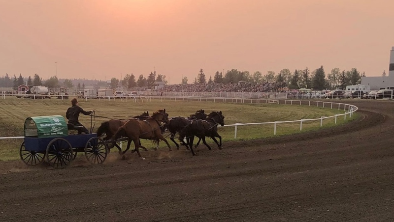 Wagons at Westerner says a chuckwagon horse needed to be euthanized after it was injured during a race on Saturday evening. (Supplied/Facebook)