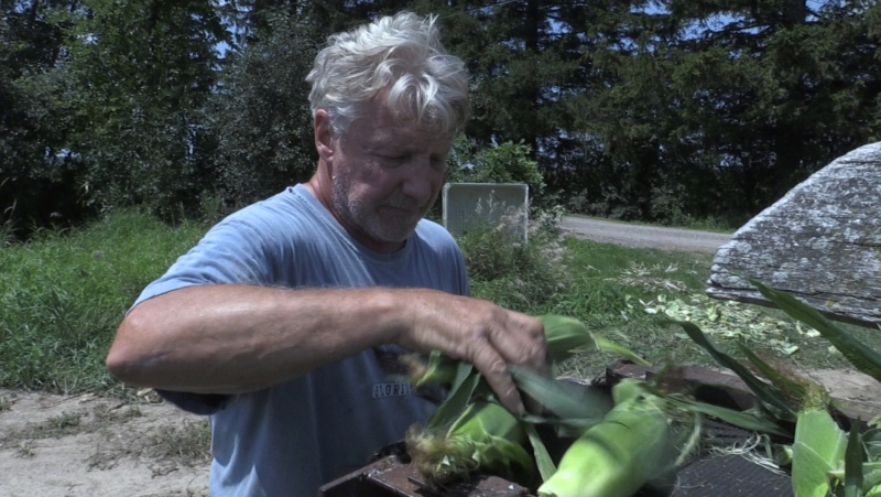 Reg Thomas Sr. looks over the sweet corn in London, Ont. on Monday, July 26, 2021. (Bryan Bicknell / CTV News)
