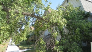 Bev Magis said a large tree limb fell on her Atlantic Avenue home on July 25, 2021. (Source: Bev Magis)