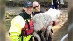 Firefighters pose with the Samoyed Huskey rescued from an embankment at the Terwillegar Dog Park on Saturday (Source: Edmonton Fire Rescue Services)