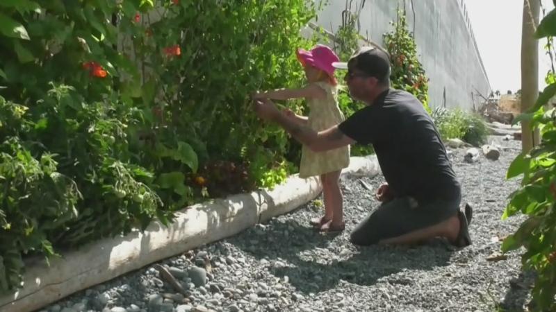 Community garden at risk of closing down
