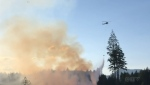 Firefighters battle a one-and-a-half-acre wildfire that was discovered on a Christmas tree farm south of Nanaimo this week.