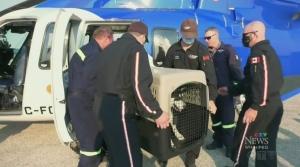 Animal welfare group aids fire zone pets