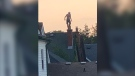 Male suspect on top of a residence on Beattie Avenue in London, Ont. on Tuesday, July 27, 2021. (Source: Reddit / Lowasasnakesbelly)