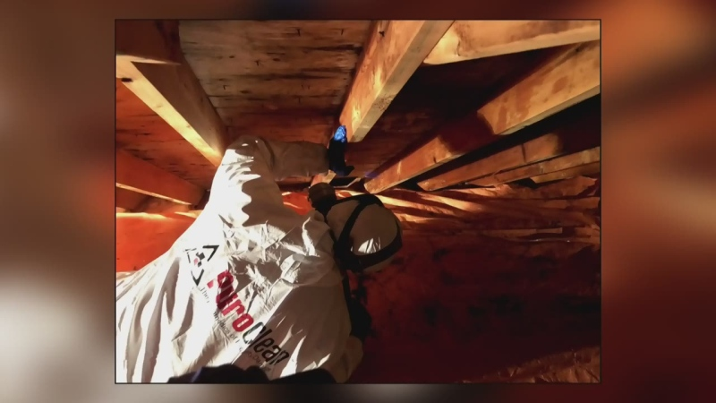 Ask an Expert: Mold in the home