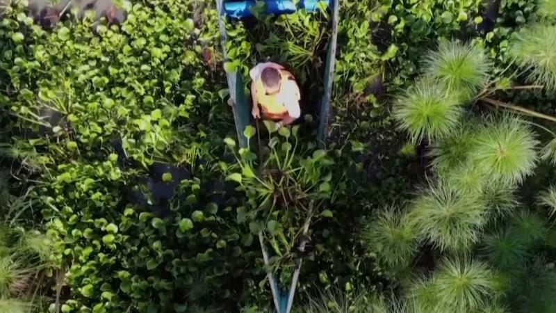 Kenyan man turns water weeds into fuel