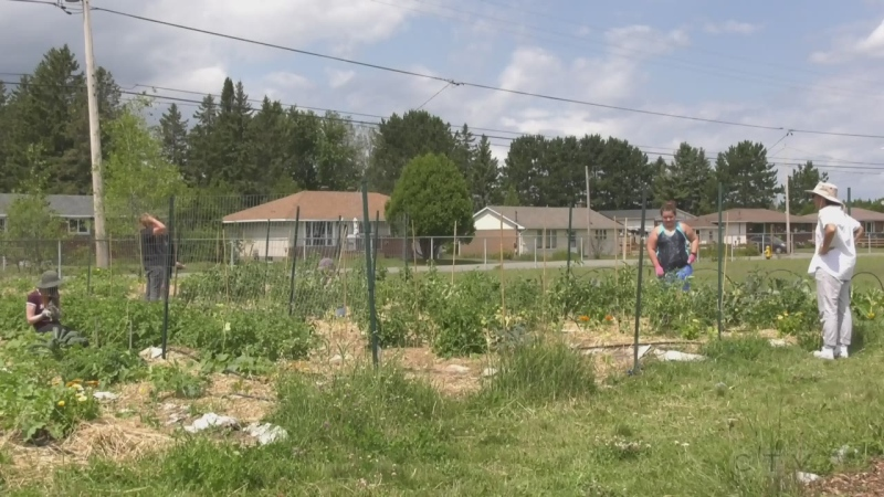 Youth in Sudbury take to the gardens