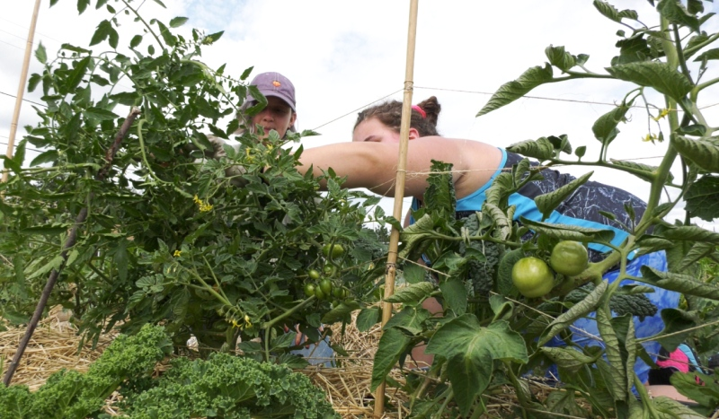 Sudbury Shared Harvest received a $56,900 grant from the Ontario Trillium Foundation in 2019 to help put together the Youth Agricultural Mentors program. (Alana Pickrell/CTV News)