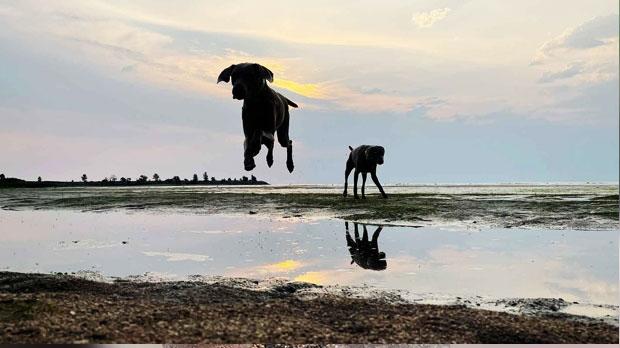 Dog beach at sunrise this morning in Winnipeg Beach. Photo by Pat Payjack.