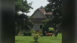 A loose llama spotted near Guelph (Supplied: Rudy Gwinner)