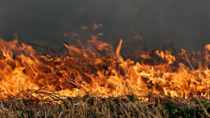 A grass fire is shown in an image from shutterstock.com.