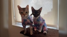 Kristen Janssen noticed a gap in the market when it came to stylish cat clothes.