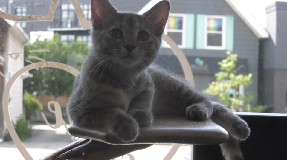 Cat Cafe Hintonburg