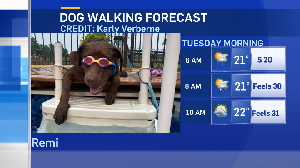 Dog-walking forecast July 30