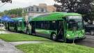 Kingston Transit's new fully electric buses. (Kimberley Johnson / CTV News Ottawa)