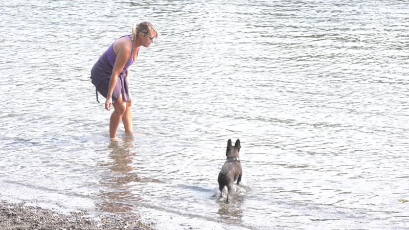 When it's hot, not many people or pets are on the pathways. Instead they gather around the Bow River where their animals can cool off.