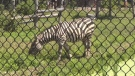 Moncton City Council is considering a multi-million dollar expansion of the Magnetic Hill Zoo.