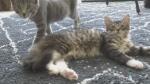 Cat Café struggles to scratch out a living