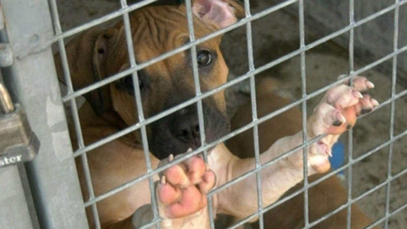 North Bay taking in rescue dogs from the U.S.