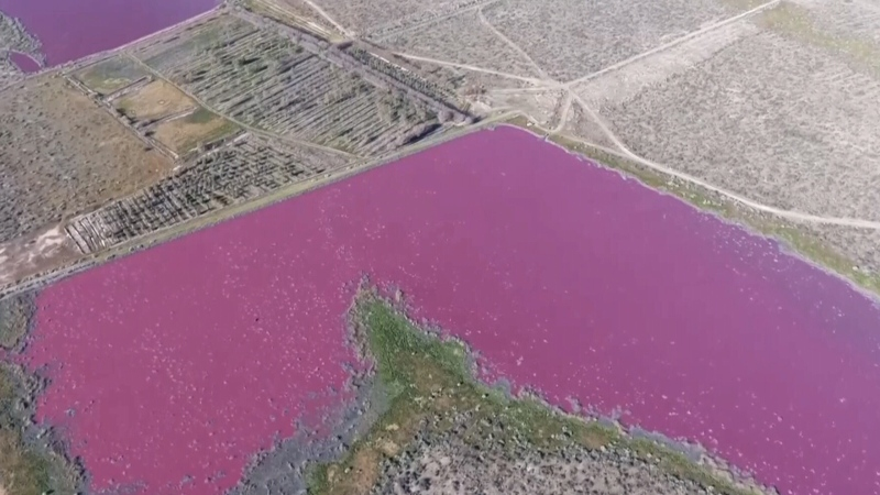 Pollution caused this lake in Argentina to turn pi