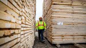 FILE - Darcy Elliott, shipping supervisor at Spray Lake Sawmills, inspects lumber at the facility in Cochrane, Alta., Thursday, May 20, 2021.THE CANADIAN PRESS/Jeff McIntosh