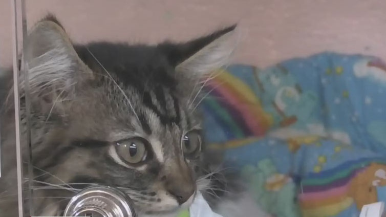 Moncton SPCA needs fosters and food
