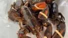 Lobsterfest has returned to Yorkton. (Hafsa Arif/CTV News)