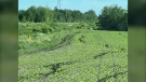 Farmers in the St. Clements area have been struggling to keep off-roaders out of their fields. (Source: Ron Pateski)