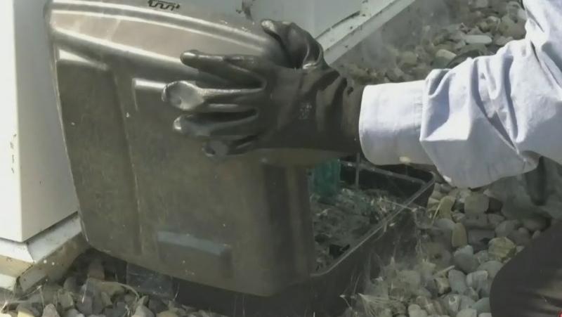 Alberta exterminators run ragged